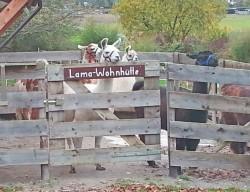 Lamatrekking-Lamawandern-254