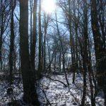 Winterstimmung während der Lamawanderung