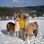 Lamawanderung im Winter