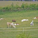 Auch Lamas lieben das Sonnenbad
