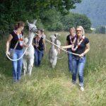 Jungesellenabschied mit den Hunsrück Lamas