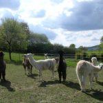 Die Produzenten von Lama Naturalis
