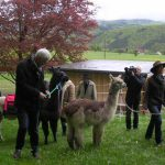 Die Hunsrück Lamas waren Filmdarsteller!