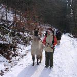 lamatrekking-lamawandern-57