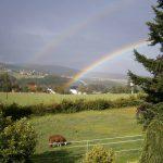 Regenbogen über der Lamaweide