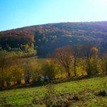 Bunter Herbstwald bei Lamatrekking