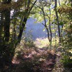 Herbststimmung während der Lamawanderung