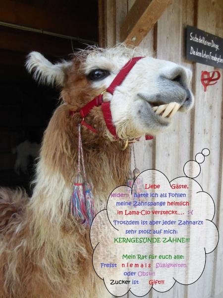 Lamatrekking-Lamawandern-433